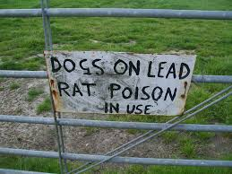 rat poison dog