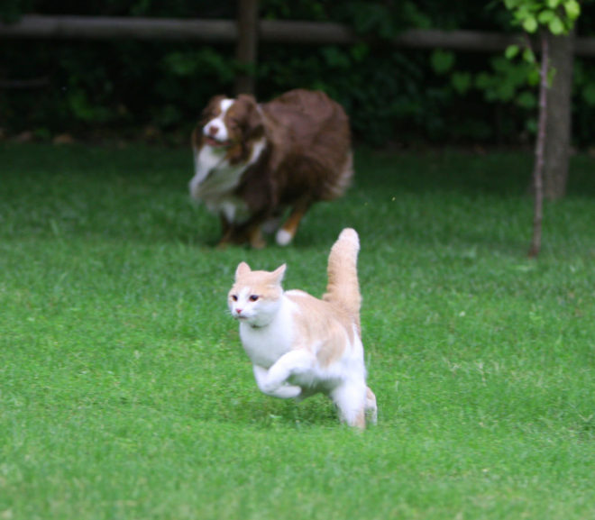 dog chasing cat