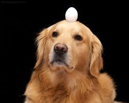 dog eat egg