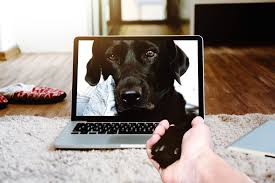 pet camera for dogs