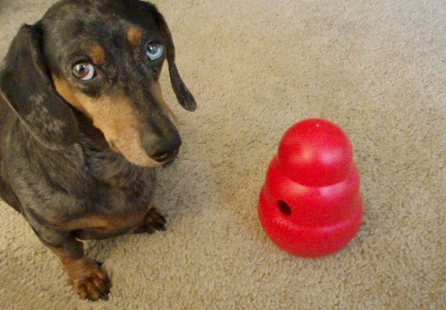 Absolutely The Best Toys For Dachshunds