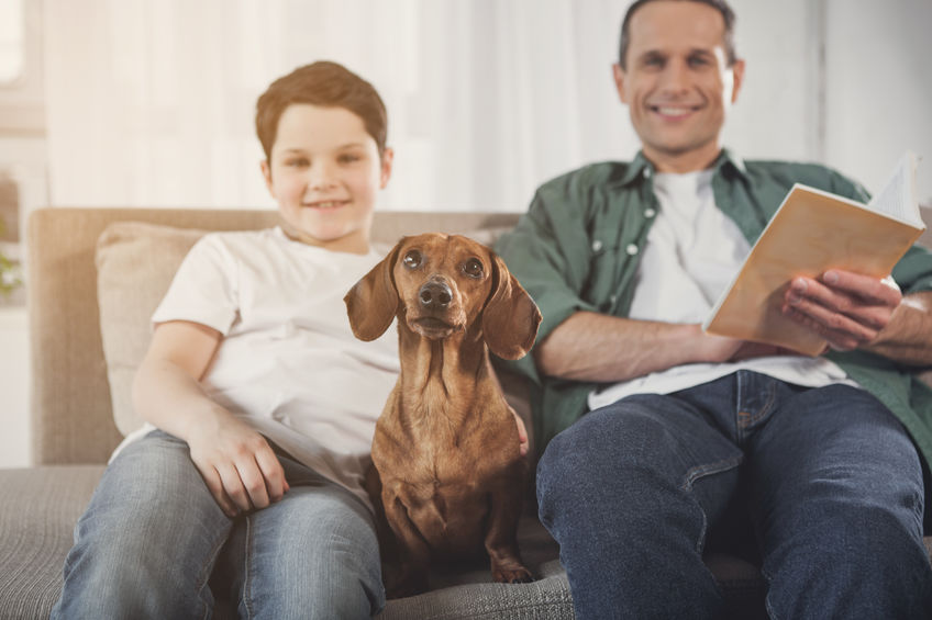 Dachshund good family dog